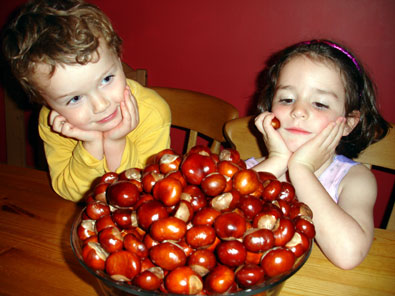 the biggest bowl of conkers you've ever seen